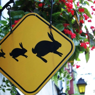 Attention- pedestrian crossing for bunnies
