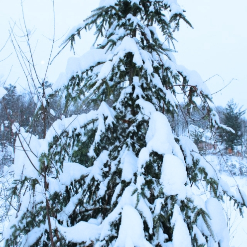 I think I found my Christmas Tree