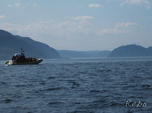 Zodiac on Fjord of Saguenay